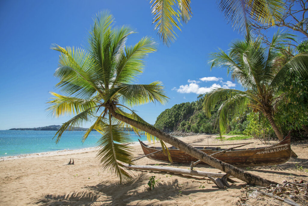 Plage  avec cocotiers - Guadeloupe