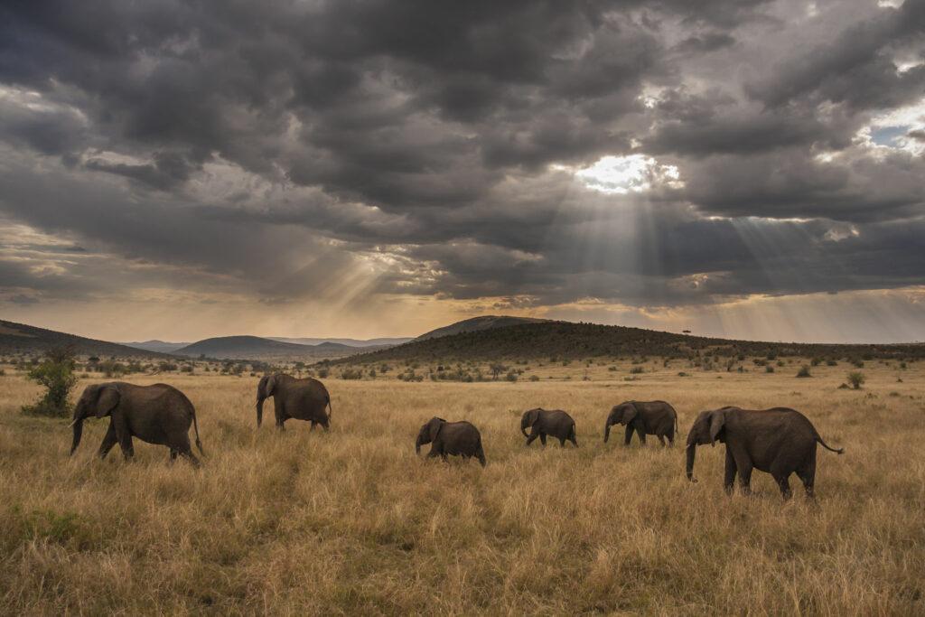Circuit Kenya Tansanie