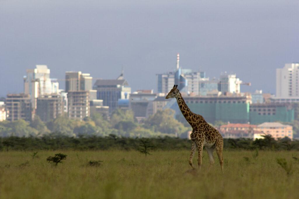 circuit Kenya - Nairobi