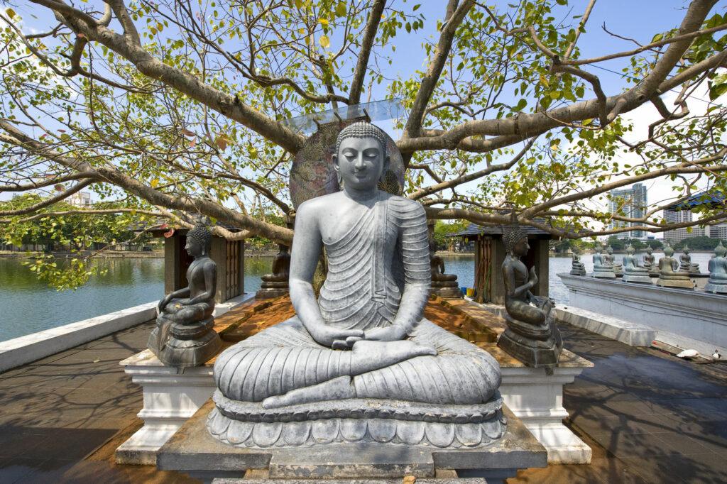 circuit Sri Lanka - Colombo, Le Voyaging