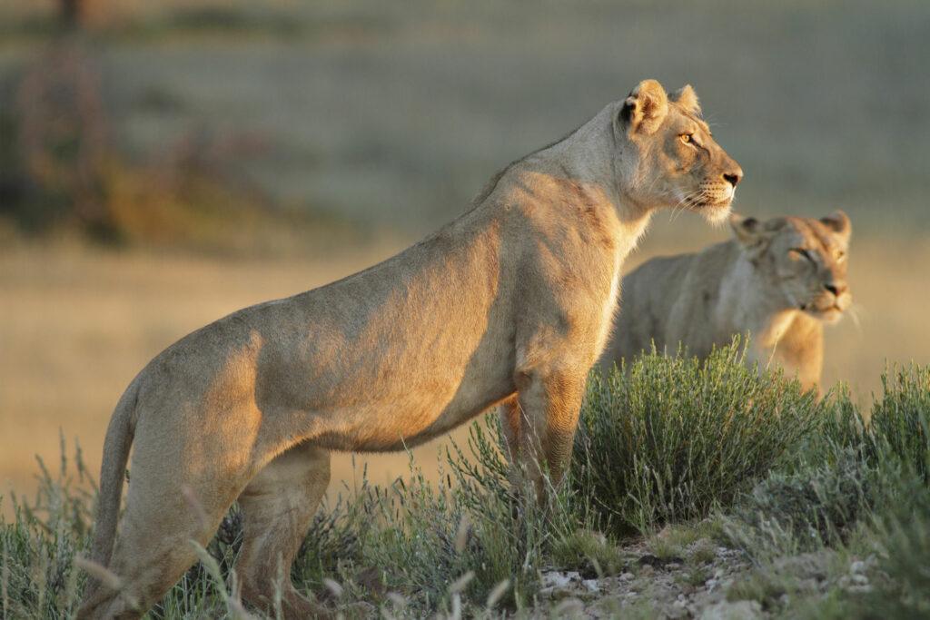 circuit Afrique du sud - sauvage