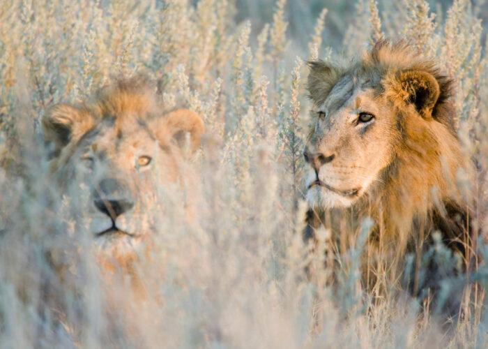 circuit Afrique du Sud - Le Voyaging