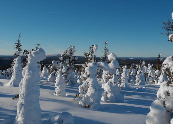 Magie de fin d'année : Laponie, aurores et Cap Nord